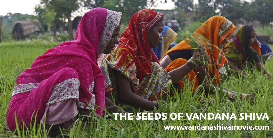 JPEG Banner The Seeds of Vandana Shiva